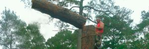 about-gardners-tree-services