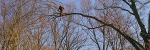 cutting-tree-Irmo